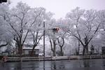 善光寺の雪