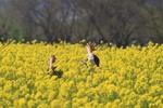 千曲川ふれあい公園花まつり