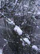 長野市内の初雪
