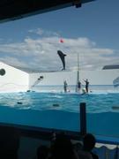 上越水族館のイルカショー