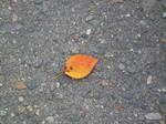 一葉落ちて、天下の秋を知る