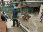 城山動物園の鹿