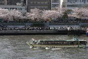 隅田公園の水上バス