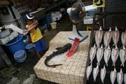 まるいちの鮫